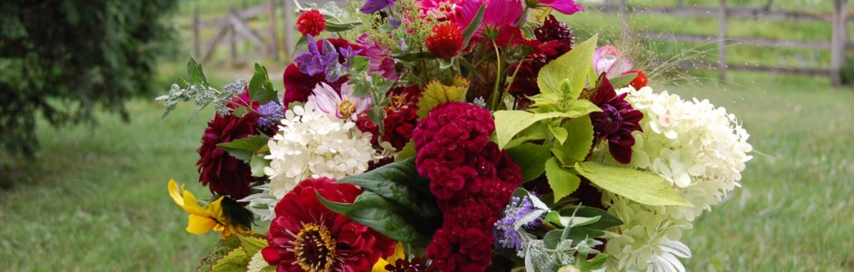 Little big farm blairstown nj organic cut flowers for weddings fall flowers junglespirit Images