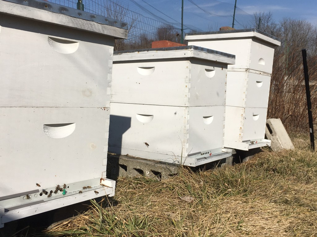 Beehives in February 2016